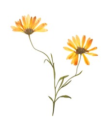 Wild dried meadow flowers on white background
