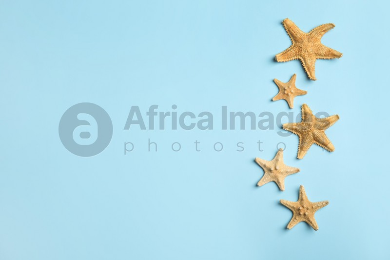 Beautiful sea stars on light blue background, flat lay. Space for text