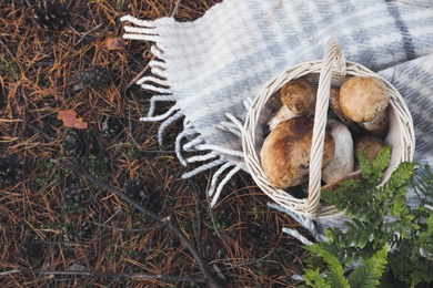 Wicker basket with fresh wild mushrooms in forest, above view