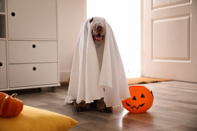 Adorable English Cocker Spaniel dressed as ghost with Halloween trick or treat bucket at home