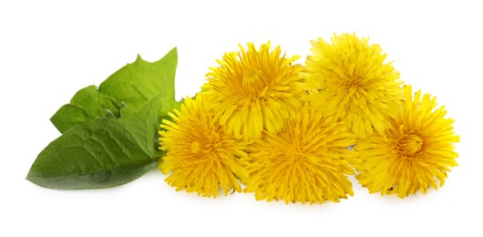 Beautiful yellow dandelions with leaves on white background