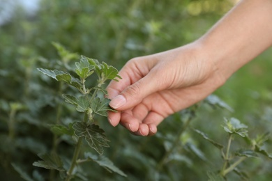 Woman touching leaves on plant in garden, closeup