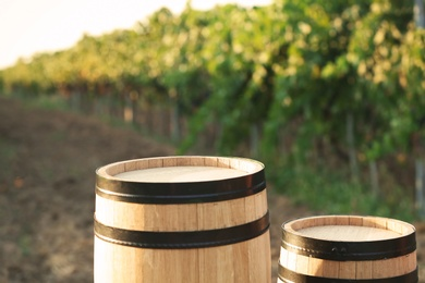 Wooden barrels standing in vineyard on sunny day. Wine production