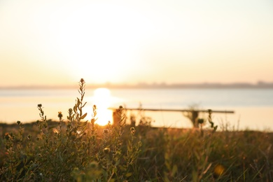 Beautiful wild flowers near river at sunrise. Early morning landscape