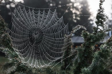 Closeup view of cobweb with dew drops on plants in forest