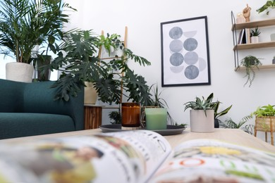 Living room interior with modern furniture and beautiful houseplants, view from magazine
