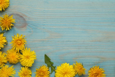 Beautiful yellow dandelions on light blue wooden table, flat lay. Space for text