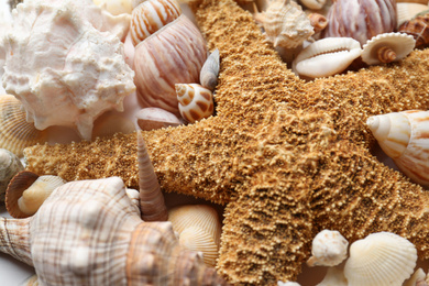 Composition with starfish and beautiful seashells as background, closeup