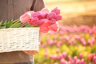 Man holding basket with blossoming tulips outdoors on sunny spring day