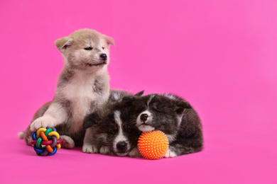 Cute Akita inu puppies with toys on pink background. Friendly dogs