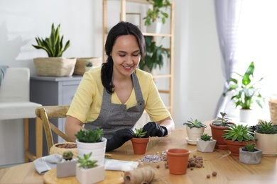 Mature woman potting succulent plant at home. Engaging hobby