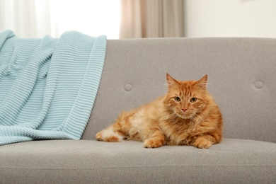 Cute friendly cat looking at camera on sofa indoors