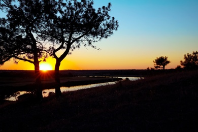 Picturesque view of tree near river at sunset