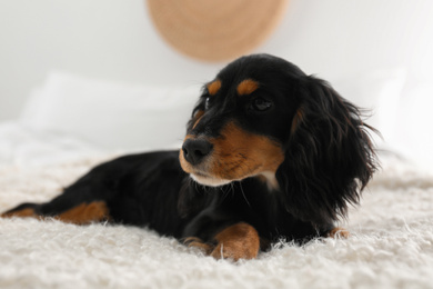 Cute dog relaxing on fluffy rug at home. Friendly pet