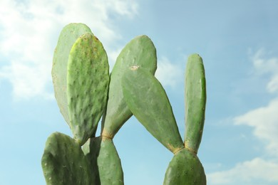 Beautiful exotic cactus outdoors against blue sky