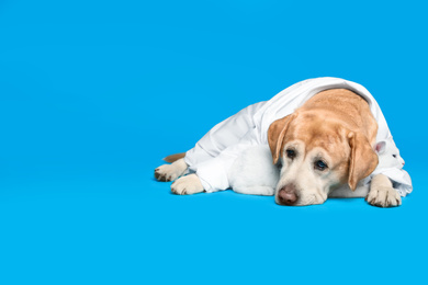 Cute Labrador dog in uniform with stethoscope as veterinarian and cat on light blue background