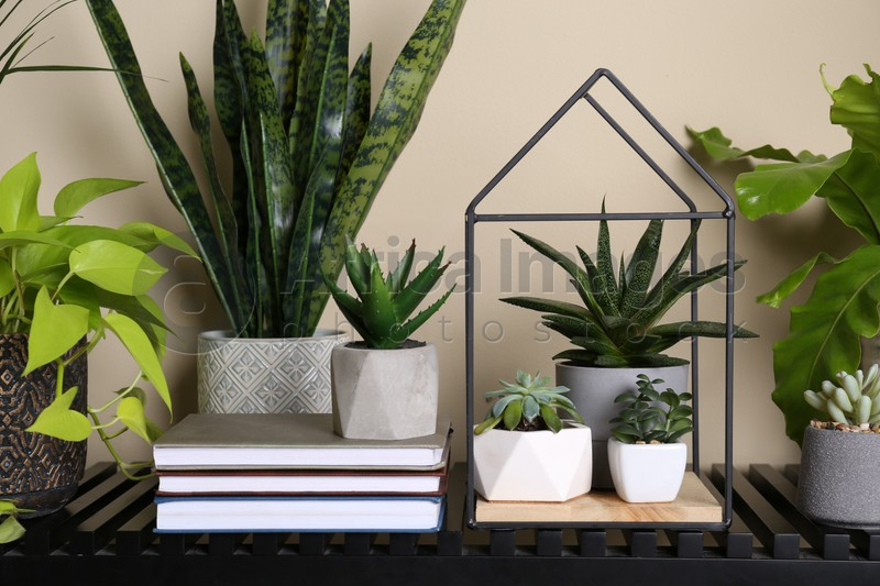 Beautiful potted plants on table indoors. Interior design