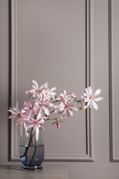 Magnolia tree branches with beautiful flowers in glass vase on table against grey background