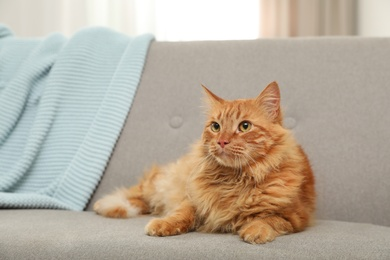Cute friendly cat lying on sofa indoors