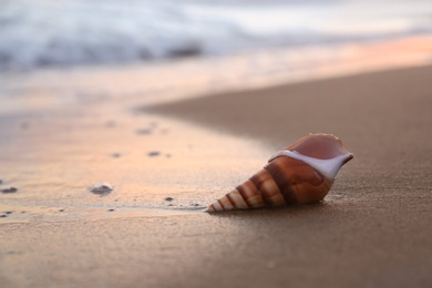 Beautiful seashell on sandy beach in morning. Space for text