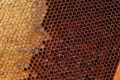 Closeup view of hive frame with honey as background