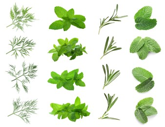 Set with different herbs on white background