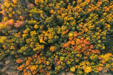 Aerial view of beautiful forest on autumn day