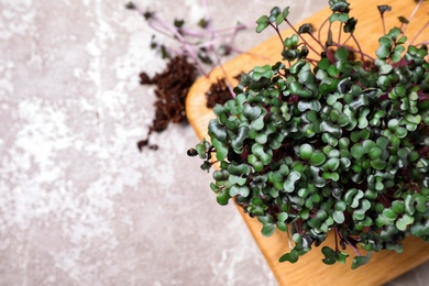 Fresh organic microgreen on light grey table, flat lay. Space for text