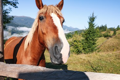Cute horse near fence in mountains, space for text. Lovely domesticated pet