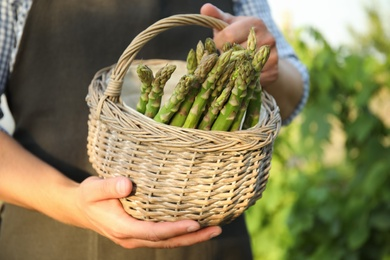 Man holding wicker basket with fresh raw asparagus outdoors, closeup