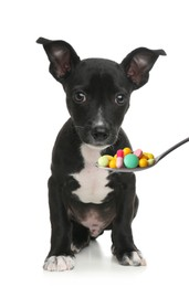 Cute puppy and spoon full of different pills on white background. Vitamins for animal