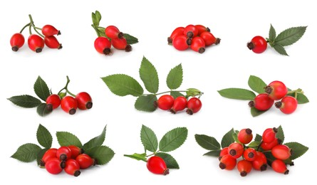 Set with ripe rose hip berries on white background
