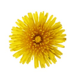 Beautiful blooming yellow dandelion isolated on white