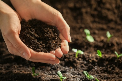 Woman with handful of soil near young seedlings, closeup