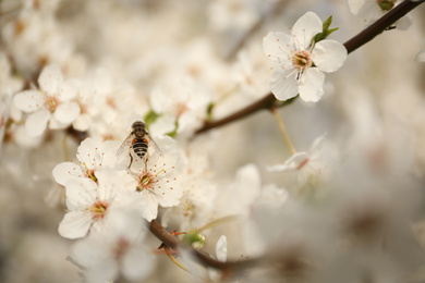 Insect on blossoming tree with outdoors, closeup. Spring season