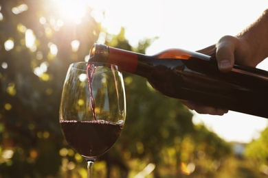 Man pouring wine from bottle into glass at vineyard, closeup