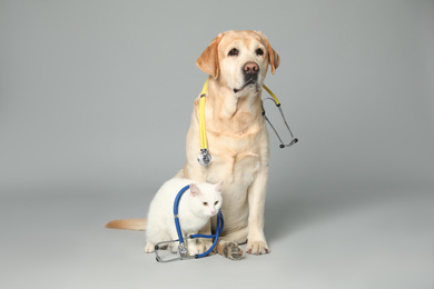 Cute Labrador dog with stethoscope as veterinarian and cat on grey background