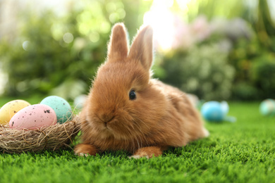 Adorable fluffy bunny and decorative nest with Easter eggs on green grass, closeup