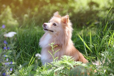 Cute dog on green grass in park