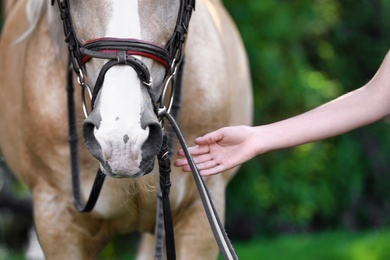 Palomino horse in bridle and young woman outdoors, closeup