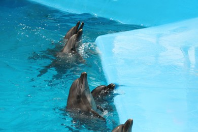 Cute dolphins in pool at marine mammal park