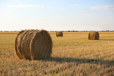 Round rolled hay bales in agricultural field on sunny day