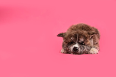 Cute Akita inu puppy on pink background, space for text. Friendly dog