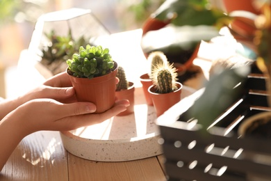 Woman taking care of home plants at table, closeup with space for text