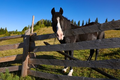 Cute horse near fence outdoors. Lovely domesticated pet