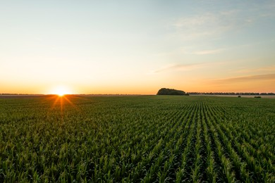 Aerial view of agricultural field at sunrise