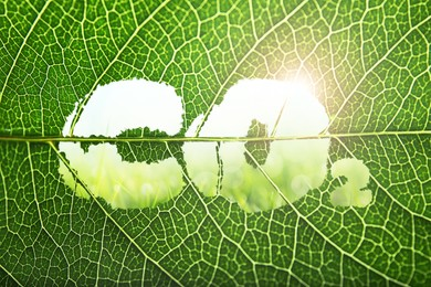 Concept of clear air. CO2 inscription cut out on green leaf, closeup