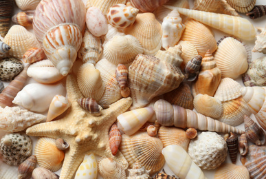 Different seashells and starfish as background, closeup