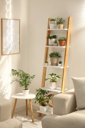 Decorative wooden ladder in stylish living room interior