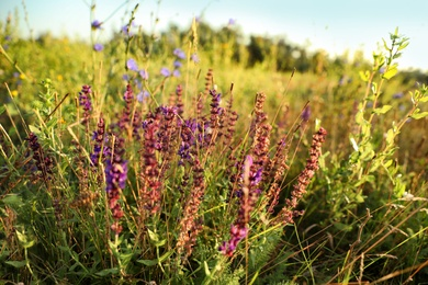 Beautiful field with wild flowers in morning